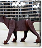Bushnell Lion Acrylic Print