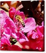 Busy As A Bee 031015 Acrylic Print