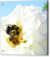 Busy Bee's Acrylic Print