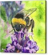 Busy Bumblebee Acrylic Print