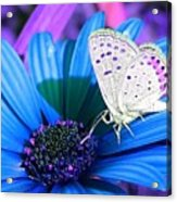 Busy Little Butterfly Acrylic Print