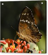 Butherfly Acrylic Print