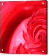 Butler Rose Acrylic Print