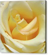 Butter Rose Acrylic Print