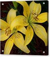 Buttercream Lilies Acrylic Print