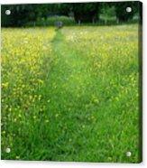 Buttercup Meadow Acrylic Print