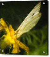 Butterflies And Blossoms Acrylic Print