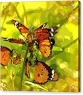 Butterflies Acrylic Print