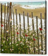 Butterflies By The Seashore Acrylic Print