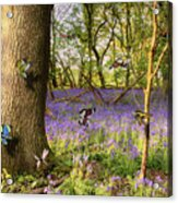 Butterflies In A Bluebell Woodland Acrylic Print