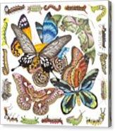 Butterflies Moths Caterpillars Acrylic Print