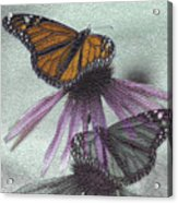 Butterflies Under Glass Acrylic Print