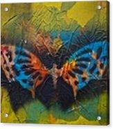 Butterfly 01 Acrylic Print