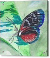 Butterfly 10 Acrylic Print