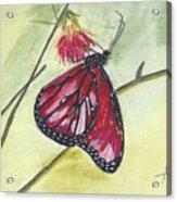 Butterfly 12 Acrylic Print