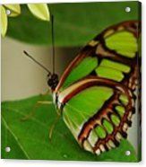 Butterfly 2 Acrylic Print by Scott Gould