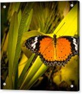 Butterfly 23 Acrylic Print