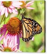 Butterfly 5 Acrylic Print