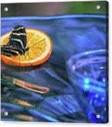 Butterfly 6316 Acrylic Print