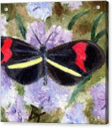 Butterfly Aceo Acrylic Print