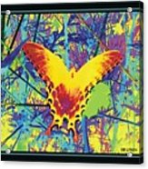 Butterfly All Aglow Acrylic Print