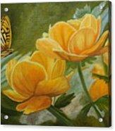 Butterfly Among Yellow Flowers Acrylic Print