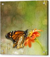 Butterfly And Bokeh Acrylic Print