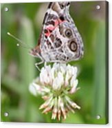 Butterfly And Bugs On Clover Acrylic Print