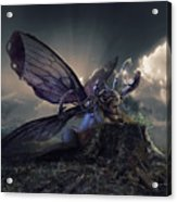 Butterfly And Caterpillar Acrylic Print