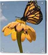 Butterfly And Flower Acrylic Print