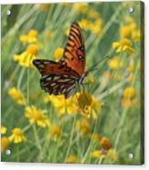 Butterfly And Flowers Acrylic Print