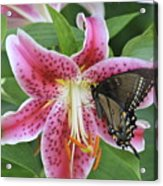 Butterfly And Lilly Acrylic Print