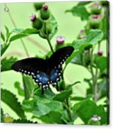 Butterfly And Mossy Pond Acrylic Print