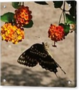 Butterfly And Nature Acrylic Print
