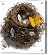 Butterfly And Nest Acrylic Print by Tony Cordoza
