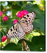 Butterfly And Pink Flower Acrylic Print
