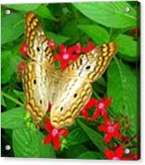 Butterfly And Red Star Sprig Acrylic Print
