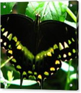 Butterfly Art 3 Acrylic Print