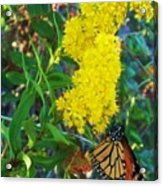 Butterfly At Cape May Nj Acrylic Print