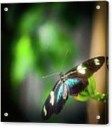 Butterfly At Cleveland Botanical Gardens Acrylic Print