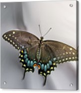 Butterfly At Picnic Acrylic Print