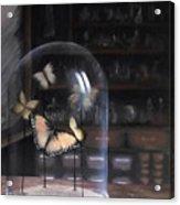 Butterfly Belljar  Acrylic Print