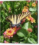 Butterfly Blend Acrylic Print