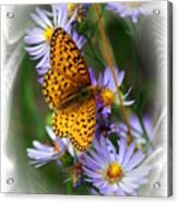 Butterfly Bliss Acrylic Print