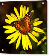 Butterfly Bloom Acrylic Print