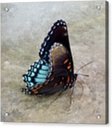 Butterfly Blue On Groovy 2 Acrylic Print