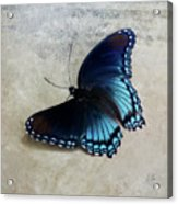 Butterfly Blue On Groovy Acrylic Print