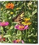 Butterfly Breakfast Acrylic Print