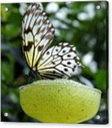 Butterfly Cocktail Time Acrylic Print
