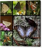Butterfly Collage 1 Acrylic Print